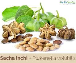 sacha inchi facts and health benefits