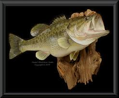 largemouth bass fiberglass fish