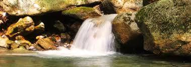 garden pond waterfalls everything