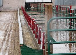 Low Labour Feeding Systems And Bunk Design For Sheep