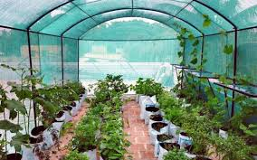 100 vegetable gardening in terrace