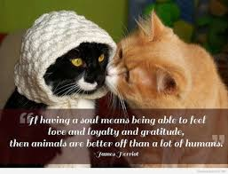 quotes about souls of animals quotes