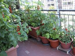 containers let gardeners plant flowers