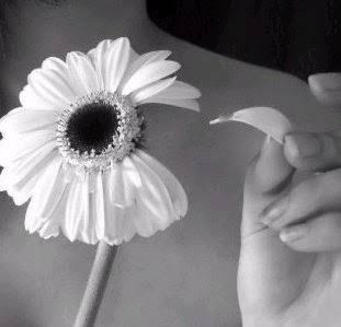 """Resultado de imagem para imagens de pessoas arrancando petalas de flores"""""""