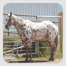 brown spotted appaloosa horse gifts on