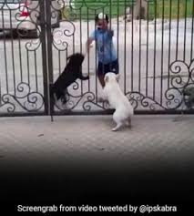 Viral Video Boy Does Bhangra In Front Of Dogs Their Reaction Is Hilarious