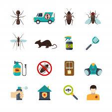 Pest Images | Free Vectors, Stock Photos & PSD