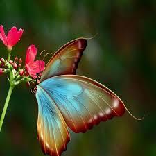 اجمل صور فراشات احب ان اشاهد الفراشات دموع جذابة