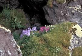 Ücretsiz resim: Hall, ada, jacobs, merdiven, lousewort, dalıcımartı, koloni