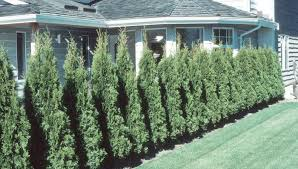 Grow Trees And Shrubs As Privacy Screens