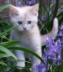Here's ten reasons why young kittens are so cute - Independent.ie