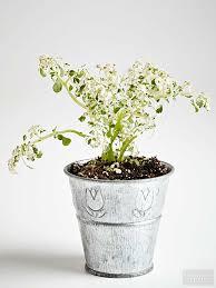top plants for fairy gardens better