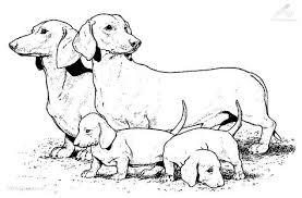 Http Www 1001kleurplaten Nl Kleurplaten Full Kleurplaat Hond