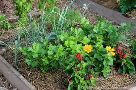 creative vegetable gardener 5 tips for