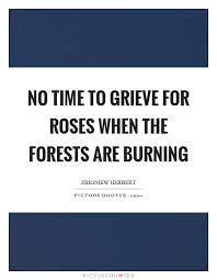 no time to grieve for roses when the forests are burning picture