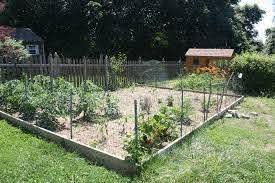 How To Chicken Proof Your Garden Modern Farmer