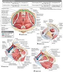 floor anatomy and