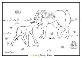 Kleurplaat Paard Download Gratis Paarden Kleurplaten Eendier Nl