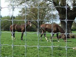 Horse Netting Wire Stock Fencing Agricultural Fencing Ashford Kent