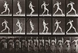 Man running, Plate 7 from Animal Locomotion, 1887 Photograph by Eadweard  Muybridge