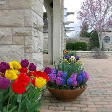 bulb garden design windowsunity