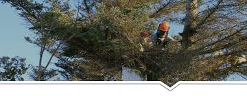tree felling cape town tree removal