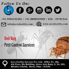 Protect Your family from Bed Bug with the help of pest control services at  seva facility... Head Offic… | Pest control bed bugs, Pest control services,  Pest control