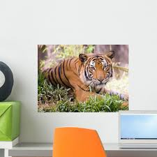 Tiger Wall Decal Black And White Flying Vinyl Bengal Design Uk Daniel Neighborhood Large Woods Vamosrayos