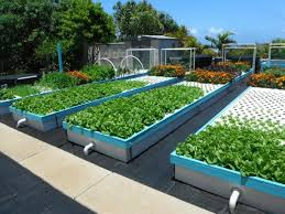 aquaponics is easy with our systems