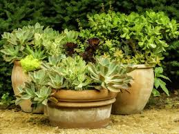 shade loving container plants