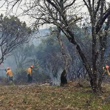 Golden proposes wildfire task force   Mail Tribune