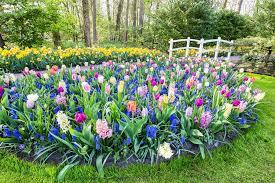plant flower bulbs