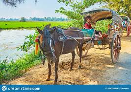 The Young Coachman In Cart, Ava, Myanmar Editorial Stock Image ...