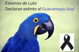 Guacamayo azul se ha extinguido