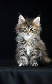 1600x2560 القطط Phablet خلفيات المحمول 7380897
