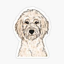 Goldendoodle Stickers Redbubble