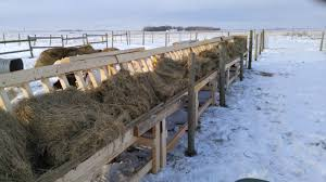 Premier 1 Supplies Fenceline Feeder Design With A Twist Wooden Slats That Won T Irritate The Goats Noses When The Temps Drop T Hay Feeder Future Farms Sheep