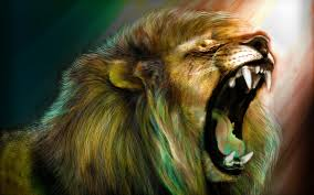 angry lion wallpapers top free angry