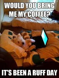 coffee you quotes cute memes animals quote coffee pets funny