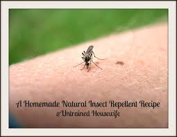 a homemade natural insect repellent