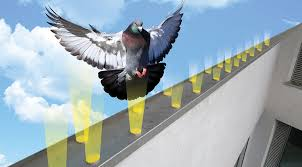 repel birds without a physical barrier