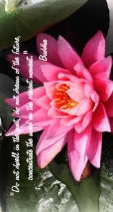 lotus flower quote electronics tech accessories zazzle co uk