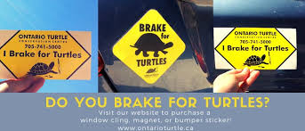 Ontario Turtle Conservation Centre On Twitter Is Your Vehicle Really Summer Ready If You Don T Have A Brake For Turtles Window Cling Magnet Or Bumper Sticker Be Road Ready And Purchase One
