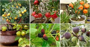 grow your favorite fruit in pot at home