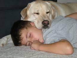 21 Heartwarming Pictures That Portraits Man-Dog Relationship
