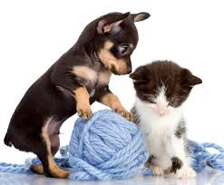 puppy and kitten wallpaper 48