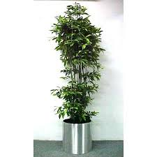 non toxic house plants