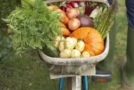 vegetable plants that need post