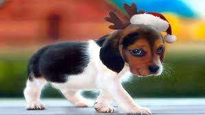 200 awesome puppy wallpapers free for