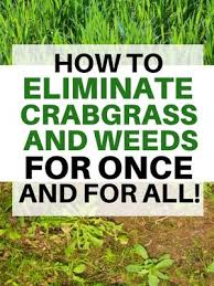 how to eliminate crabgrass on your lawn